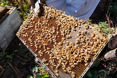 Beehives with bees