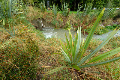 Stream during rain with native riparian planting along bank.  Wanaka.  Image by Bradley White for Manaaki Whenua
