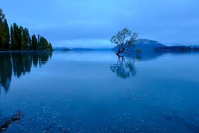 That Wanaka tree. Wanaka Lake.  Image by Bradley White for Manaaki Whenua