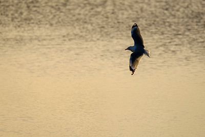 Birds at Ferrymead