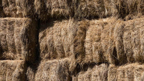 Hay bales stacked on a farm in Taitapu.