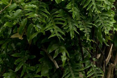 Plants in Bushy Park in Whanganui, Manaaki Whenua image by Bradley White