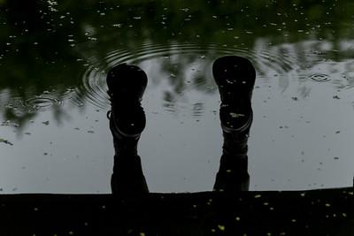 Reflection in a wetland pond in Bushy Park, Whanganui, Manaaki Whenua Image by Bradley White