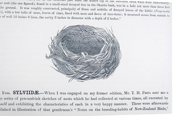 Historical native bird drawings