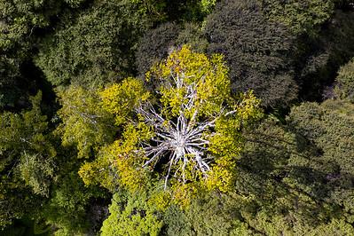 Native bush in Waitakere