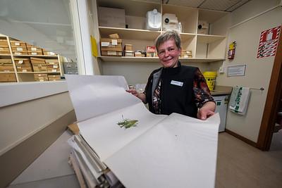 Herbarium collection