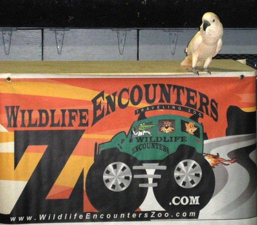 Wildlife Encounters - Traveling Zoo visits Pollard School
