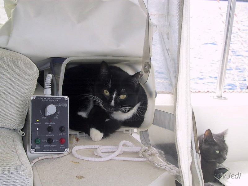 Cruising Grenadines<br /> This is my bucket and I'm not coming out!