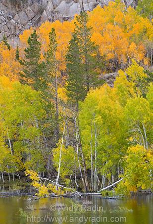 Fall scenes in the eastern Sierra Nevada, CA
