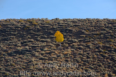 Fall scenes in the eastern Sierra Nevada, CA