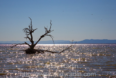 The Salton Sea, CA