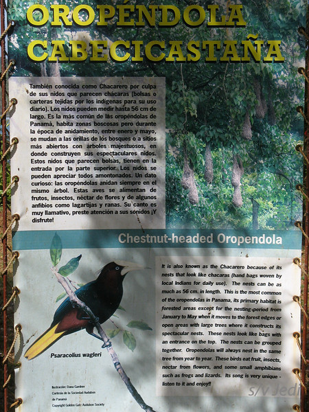 IMG_1094.JPG<br /> Strolling along the Rio Chagres.<br /> Birds