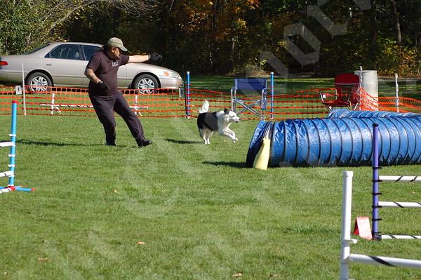 Island hosts dogged competitors