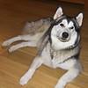 Op bezoek bij Azor<br /> Trudy was er ook ;-)