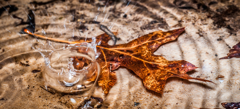 Water Droplet over leaf_Winter_West Virginia_photo by Gabe DeWitt_January 01, 2010-67
