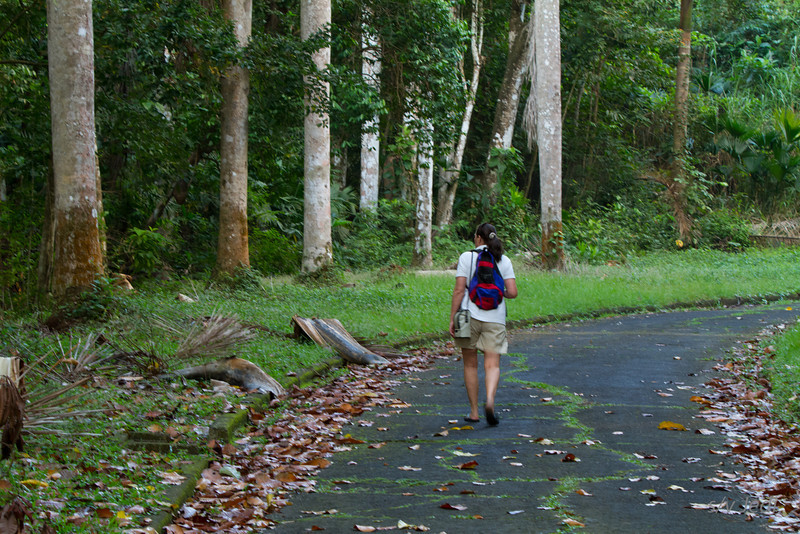 Walking along the edge of the jungle<br /> Josie looking for Agouti's and Coatimundi's.