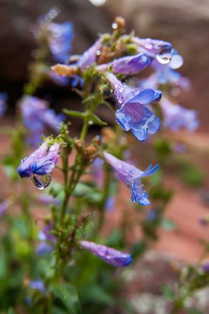 Colorado_Road Trip to California_photos by Gabe DeWitt_June 09, 2011-176