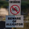 No swimming sign - Beware of alligator, no swimming. Sign at lake in Lakeland, Florida