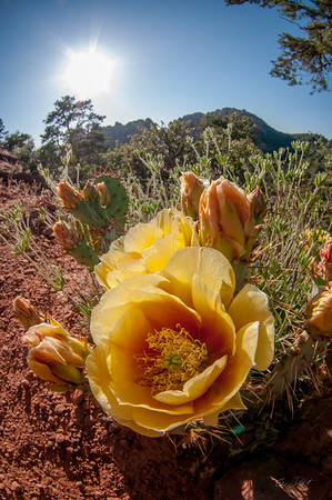 Sedona_Arizona_photo by Gabe DeWitt_May 19, 2012-257