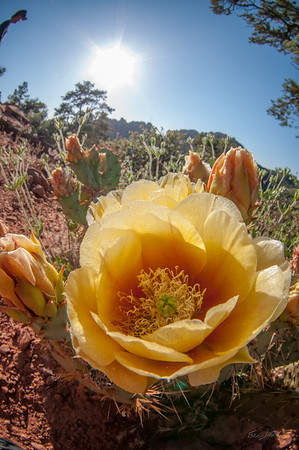 Sedona_Arizona_photo by Gabe DeWitt_May 19, 2012-258