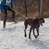 CS7G0269-Chuck & Don's Skijoring Loppet-Saturday-cr
