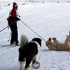 CS7G0372-Chuck & Don's Skijoring Loppet-Saturday-cr