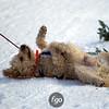 CS7G0370-Chuck & Don's Skijoring Loppet-Saturday-cr