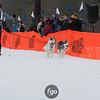 IMG_0223- Skijoring-Sunday