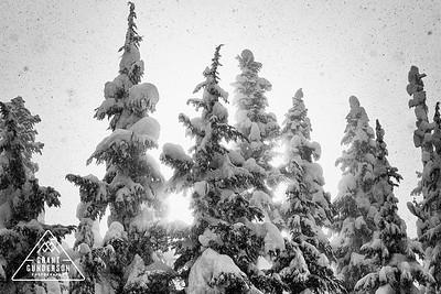 Mount Baker Treeline