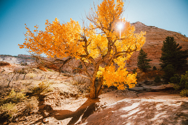 Autumn Hike_Zion National Park_Utah_photo by Gabe DeWitt_October 31, 2013-6