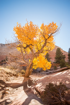 Autumn Hike_Zion National Park_Utah_photo by Gabe DeWitt_October 31, 2013-5-2