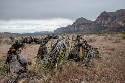 Red Rocks_Nevada_photo by Gabe DeWitt_May 09, 2013-101