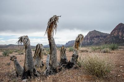 Red Rocks_Nevada_photo by Gabe DeWitt_May 09, 2013-91