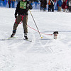 20130202 - 2013 Loppet-Chuck and Don's Skijoring-0379