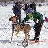 20130202 - 2013 Loppet-Chuck and Don's Skijoring-0399