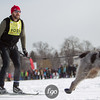 20130202 - 2013 Loppet-Chuck and Don's Skijoring-0348