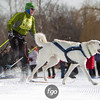 20130202 - 2013 Loppet-Chuck and Don's Skijoring-0345