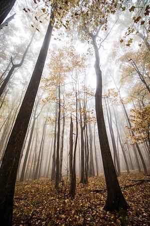 Autumn_Coopers Rocks_West Virginia_photo by Gabe DeWitt_October 18, 2014-151