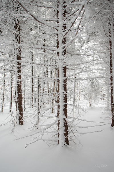 Cross Country Skiing_White Grass_Canaan Valley_West Virginia_photos by Gabe DeWitt_November 28, 2014-18