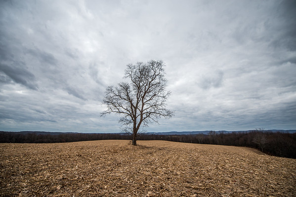 Tara Smith_Tree in a field_West Virginia_photos by Gabe DeWitt_November 30, 2014-1