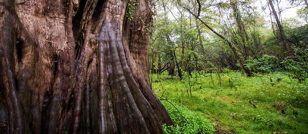 Cypress Trees_Cat Island_Louisiana_photo by Gabe DeWitt_November 05, 2014-75