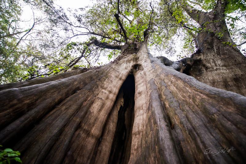 Cypress Trees_Cat Island_Louisiana_photo by Gabe DeWitt_November 05, 2014-91