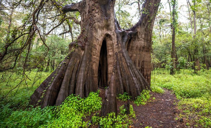 Cypress Trees_Cat Island_Louisiana_photo by Gabe DeWitt_November 05, 2014-73