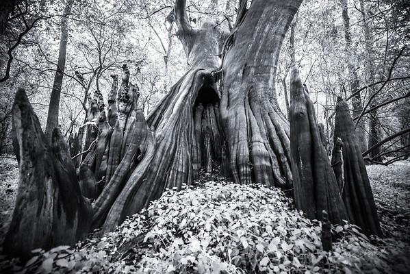 Cypress Trees_Cat Island_Louisiana_photo by Gabe DeWitt_November 05, 2014-28