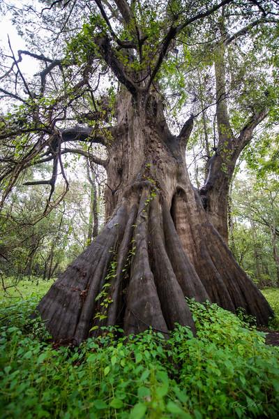 Cypress Trees_Cat Island_Louisiana_photo by Gabe DeWitt_November 05, 2014-79