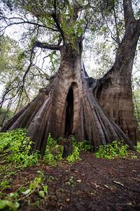 Cypress Trees_Cat Island_Louisiana_photo by Gabe DeWitt_November 05, 2014-81