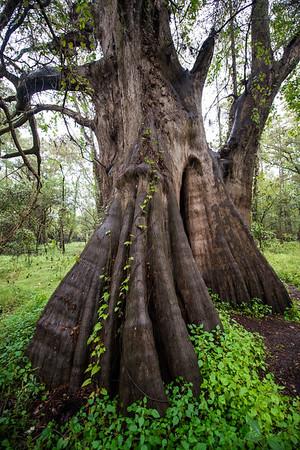 Cypress Trees_Cat Island_Louisiana_photo by Gabe DeWitt_November 05, 2014-78