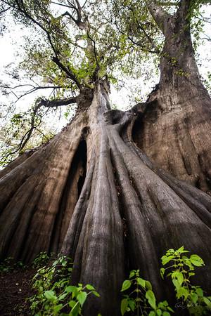 Cypress Trees_Cat Island_Louisiana_photo by Gabe DeWitt_November 05, 2014-88