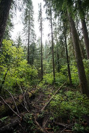 Toketee Falls_Oregon_photos by Gabe DeWitt_August 11, 2014-2