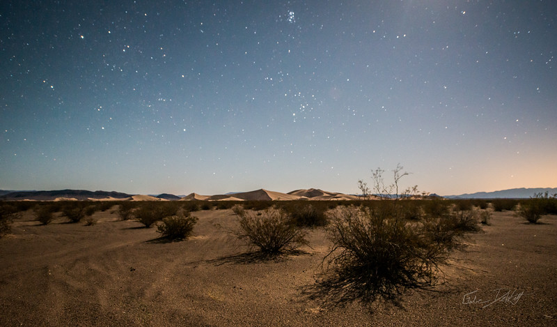 Amargosa Dunes_Nevada_photos by Gabe DeWitt_August 16, 2014-10
